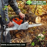 Acadian Tree and Stump Removal Service