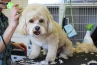 Mobile Dog Grooming - Sandy Mobile Pet Grooming