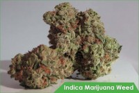 Buy Best Quality Indica ***** Weed Online | Nighttime Strains