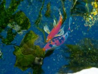 AquaLife Ponds