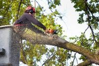 Tree Removal Macon Ga