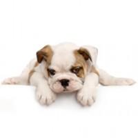 Dog Kidz Country Daycare & Boarding