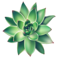 Succulents Greener A Succulent and Cacti Paradise