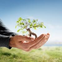 Cornell Services Tree and Shrub Inc