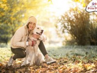 Money worth Mobile Dog Grooming Service in OKC, USA