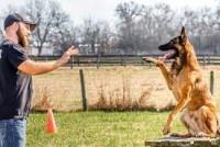 Best Puppy Training in North york