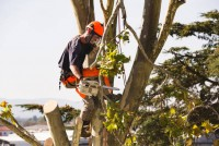 Arvada Tree Service