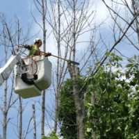 Las Cruces Tree Service