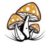 Buy Psilocybin mushrooms