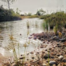 Best Environmental Consultants in Sydney, Australia