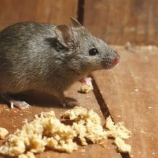 Sf Rodent Control