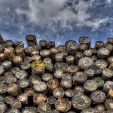 Barela Timber Management Co.