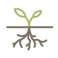 Root To Rise Therapy