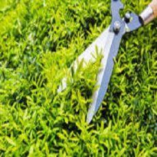 BV Landscaping