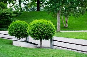 Waterloo Tree Service Pros