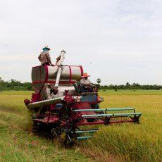 Davis Feed & Farm Supply