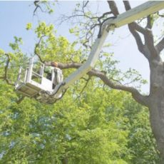 Manchester Tree Service Co