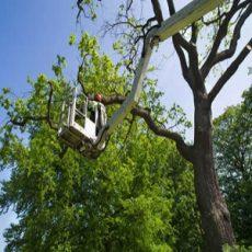 Premiere Tree Service of Westport