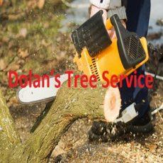 Dolan's Tree Service
