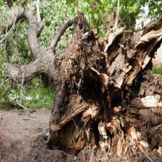 Louisville Tree Care